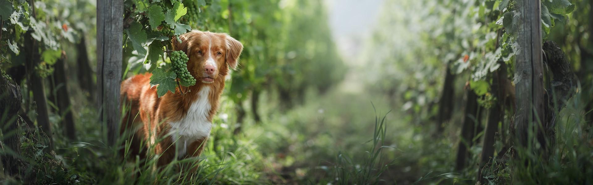 Naturalna karma dla psów